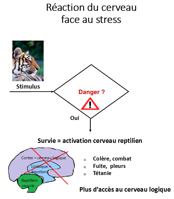 pourquoi la colère , réaction du cerveau reptilien